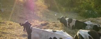 pascolo dal contadino