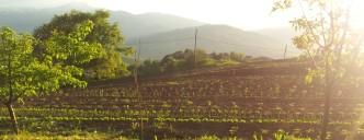 orto 3 dal contadino