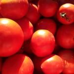 pomodori dal contadino